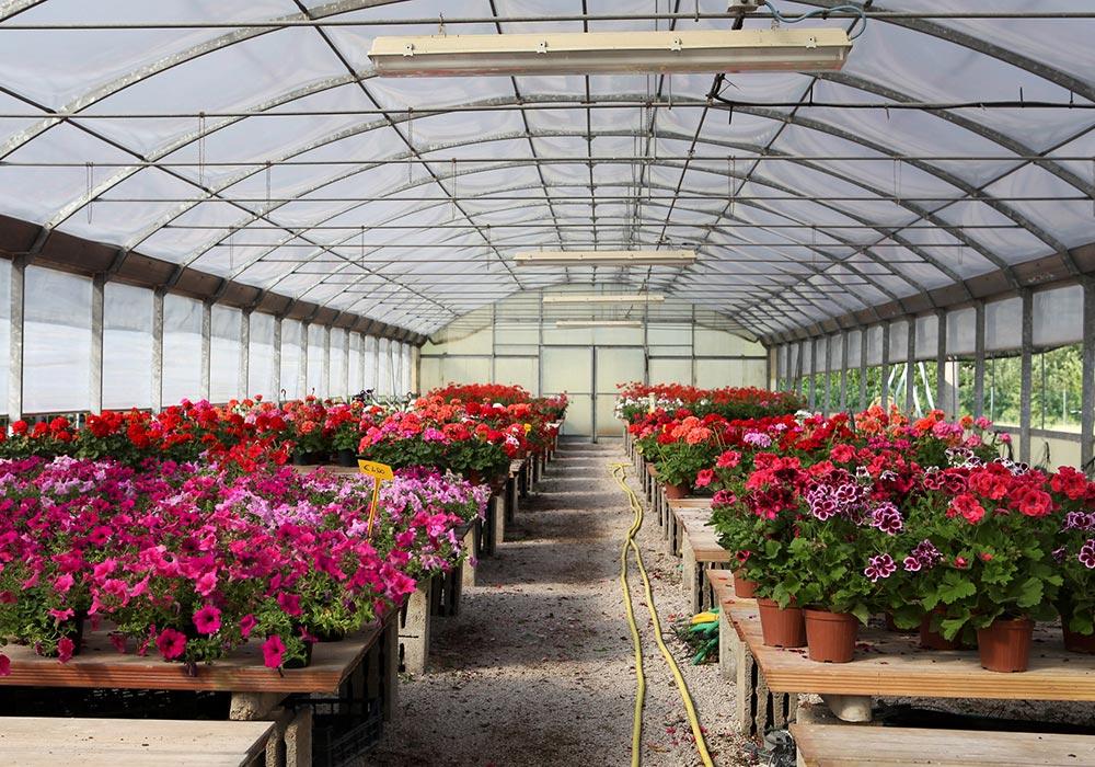 Led e floricoltura